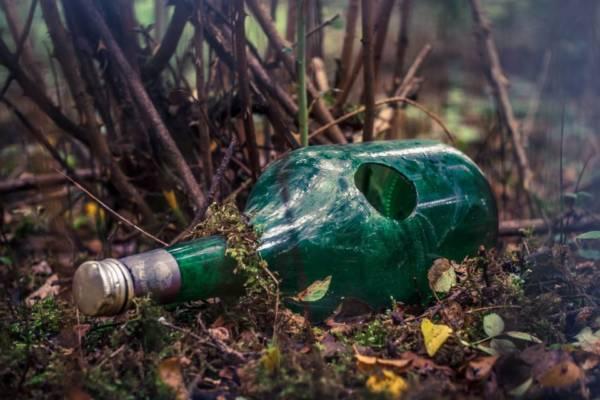 wycinka lasów, dług ekologoiczny