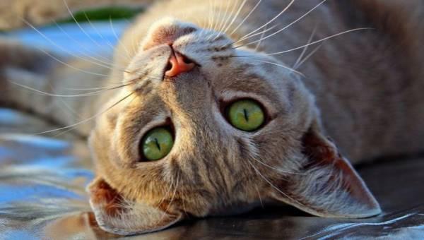 Najśmieszniejsze cytaty o kotach umieszczone na tabliczkach na całym świecie