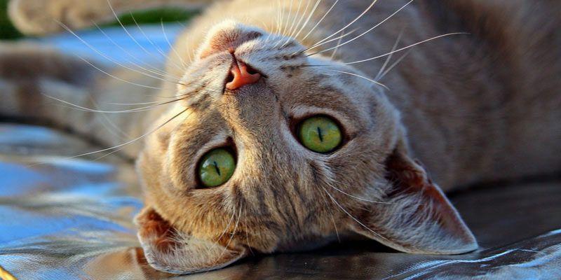 cytaty o kotach