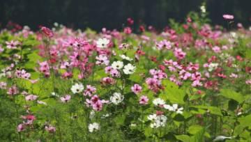 Dzikie ogrody pełne polnych kwiatów i motyli – gorący ekologiczny trend, na który warto się skusić!