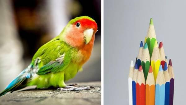 Zielony neonowy eyeliner – papuzie oko to najgorętszy makijażowy trend tego lata!