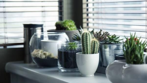 5 trików dla roślin w doniczkach i nie tylko. Poznaj tajniki domowej uprawy kwiatów opartej na najlepszych… domowych sposobach!