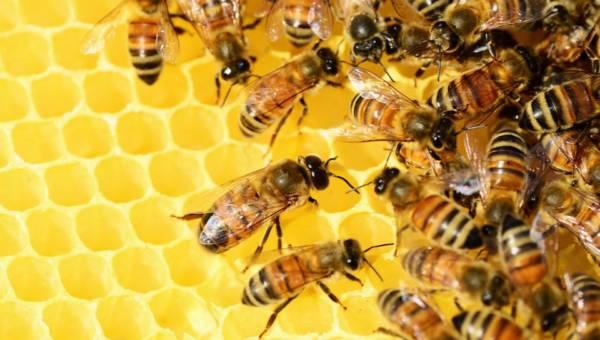 Coraz więcej pszczół w naszym życiu! Przedstawiamy opakowanie z wosku pszczelego, a także wyjątkową pizzę dla wyjątkowych konsumentów