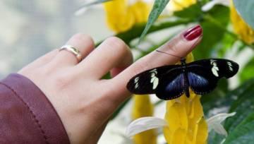 Dłonie pełne jarzębiny, gołębi i… logotypów- trendy manicure na jesień 2019