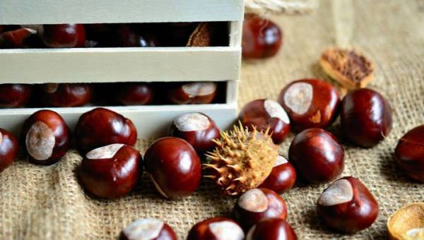 Co można zrobić z kasztanów? 5 ciekawych pomysłów na wykorzystanie owoców jesieni