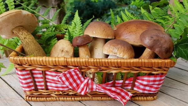 Przepisy na grzyby – 15 kuchennych wariacji z grzybami leśnymi w roli głównej!