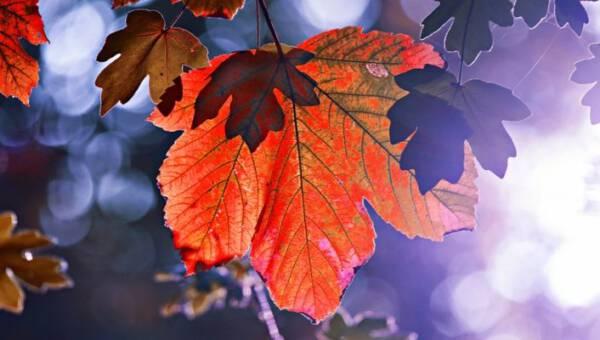 DIY z jesiennych liści – 10 pomysłów na wspólną zabawę z dziećmi