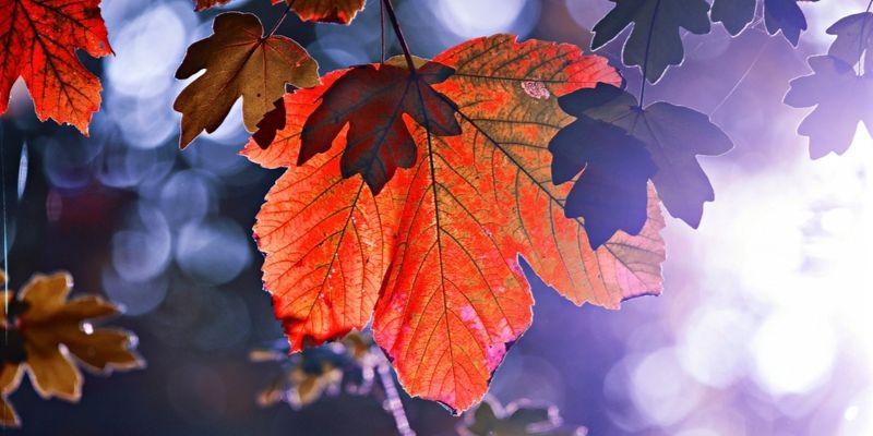 DIY z jesiennych liści