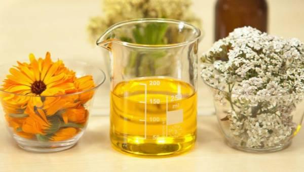 Nagietek lekarski – kwiat o właściwościach leczniczych i pielęgnacyjnych