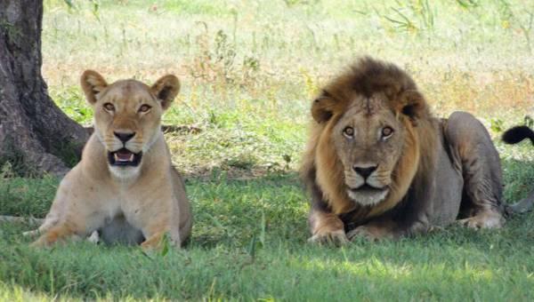 Hotel z widokiem na… lwy, żyrafy i niedźwiedzie. Zobacz miejsce, w którym możesz wziąć kąpiel, spoglądając w oczy dzikim zwierzętom!