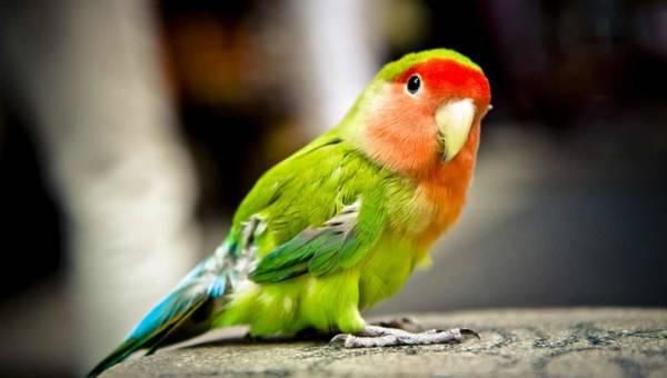 Zabawki dla ptaków – na co się zdecydować?