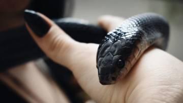 Wężowe paznokcie – gorący trend w manicure na cały 2020 rok w 27 odsłonach