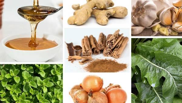 Najlepsze naturalne antybiotyki – 7 skutecznych roślin i ziół