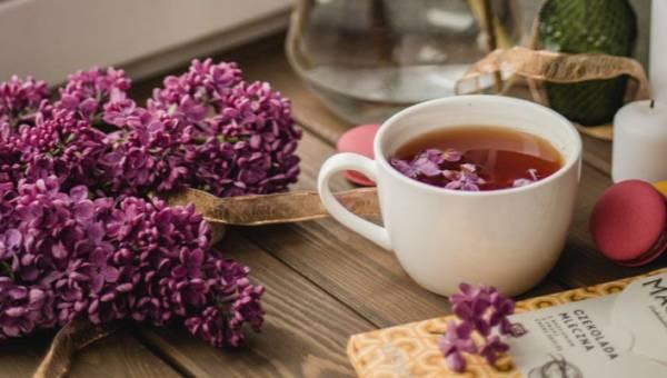 Herbata z bzu lilaka – zdrowa i aromatyczna dojrzewająca herbatka, którą możesz sporządzić właśnie teraz