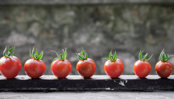 Warzywa które można uprawiać w domu – top 10 pomysłów na balkon lub parapet