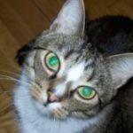 Zdjęcie profilowe Magrabka31