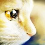Zdjęcie profilowe Patriszia